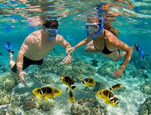Phu Quoc Snorkeling & Diving
